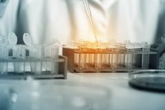 Laboratory assistant in the of food quality.Cell culture assay to test genetically modified seed.  stock photography