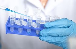 Laboratory assistant in the of food quality.Cell culture assay to test genetically modified seed.  royalty free stock photo