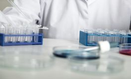 Laboratory assistant in the of food quality. Cell culture assay to test genetically modified seed.  royalty free stock photos