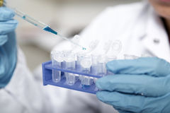 Laboratory assistant in the of food quality.Cell culture assay to test genetically modified seed Stock Photo