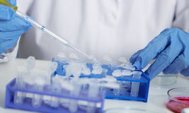 Laboratory assistant in the of food quality.Cell culture assay to test genetically modified seed.  royalty free stock image