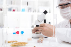 Laboratory assistant in the laboratory. Of of food quality Royalty Free Stock Image