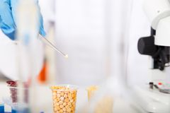 Laboratory assistant in the laboratory of food quality Royalty Free Stock Photography