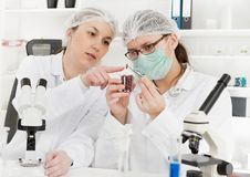 Laboratory assistant in the laboratory of of food quality Royalty Free Stock Photos