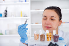 Laboratory assistant in the laboratory of of food quality.Cell culture assay to test genetically modified seed. Toning image Royalty Free Stock Photography