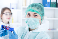 Laboratory assistant in the laboratory of of food quality.Cell culture assay to test genetically modified seed Royalty Free Stock Photo