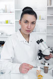 Laboratory assistant in the laboratory of of food quality.Cell culture assay to test genetically modified seed Stock Photos