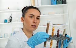 Laboratory assistant in the laboratory of of food quality.Cell culture assay to test genetically modified seed. Toning image royalty free stock images