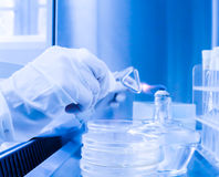Laboratory assistant in a sterile environment for micro-sampling Stock Images