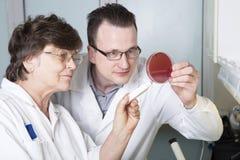 Laboratory assistants study petri Royalty Free Stock Image