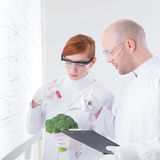 Laboratory broccoli injection Stock Images