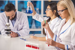 Laboratory. Chemistry and science concept. Science team working in a Stock Photo