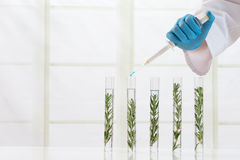 Laboratory cloning experiment on plants Royalty Free Stock Photography