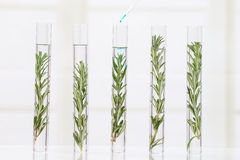 Laboratory cloning experiment on plants Stock Images