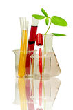 Laboratory equipment and chemical solutions. Set of laboratory equipment and chemical solutions with reflection isolated on white background with clipping path Royalty Free Stock Photos