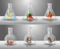 Laboratory flasks. With different living organisms inside Stock Photo