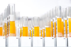 Laboratory glass test tubes filled with orange liquid for an experiment in a science research lab Stock Photo