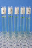 Laboratory glass testing tubes Royalty Free Stock Photos