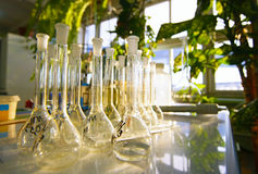Laboratory glassware. Flasks Stock Photography