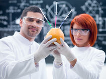 Laboratory grapefruit experiment Royalty Free Stock Photography