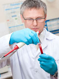 Laboratory man blood testing. Laboratory man holding a special pipette with blood droplet and test tube Royalty Free Stock Photo
