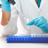 Laboratory micro pipette. Drops the biological solution in eppendorf Royalty Free Stock Image