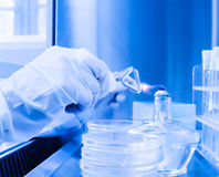 Laboratory of Microbial detection operation Royalty Free Stock Photography