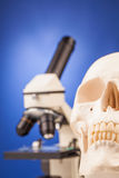 Laboratory microscope and human scull Stock Photography