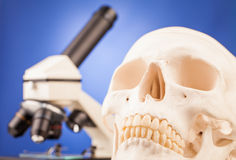Laboratory microscope and human scull Royalty Free Stock Photography