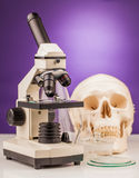 Laboratory microscope and human scull Stock Images