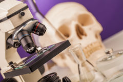 Laboratory microscope and human scull Stock Photos