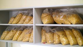 Laboratory research of corn seeds. samples of different species, varieties of selection corn. laboratory for the stock footage