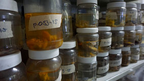 Laboratory Samples. Some small fishes preserved in plastic bottles, aquatic species stacked together in a biologic research laboratory stock photography