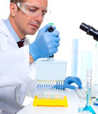 Laboratory scientist using a multi channel pipette Stock Images