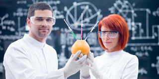 Laboratory  studies on grapefruit. Close-up of two scientists in a chemistry lab analyzing chemical reactions on an injected grapefruit Royalty Free Stock Photos