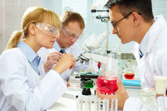 Laboratory study Royalty Free Stock Photos