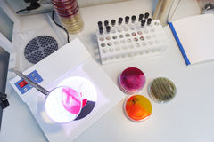 Laboratory table top view. Laboratory table view from above, study petri dishes Royalty Free Stock Images