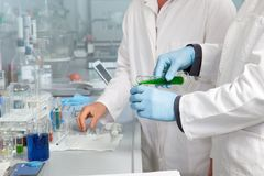 Laboratory Teamwork Stock Photography