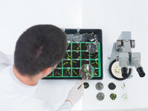 Laboratory technician checking seedlings Stock Images