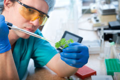 Laboratory test Stock Images