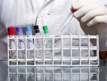 Laboratory test tubes royalty free stock photography