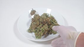 Free Laboratory Testing And Drug Demonstration, Cannabis Weed Royalty Free Stock Photography - 161912607