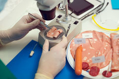Laboratory testing of cured meat products Royalty Free Stock Photography