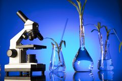 Laboratory theme. Place for text. Biotechnology and floral science theme. Experimenting with flora in laboratory. Blue background Royalty Free Stock Photo
