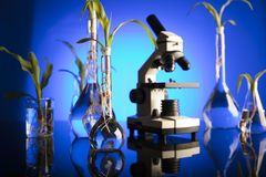Laboratory theme. Place for text. Biotechnology and floral science theme. Experimenting with flora in laboratory. Blue background Royalty Free Stock Photography
