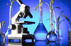 Laboratory theme. Place for text. Biotechnology and floral science theme. Experimenting with flora in laboratory. Blue background Royalty Free Stock Images
