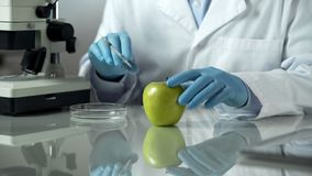 Laboratory worker carrying out research on apple, checking chemical reaction. Stock photo stock photo