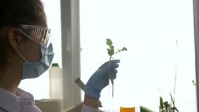 Laboratory worker examines samples of genetically modified plants into test tube in modern laboratory in vivid lighting stock video