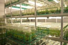 Laboratórios de pesquisa agrícola Imagens de Stock Royalty Free