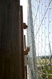 Laborers are setting up a metal  fence Royalty Free Stock Photography